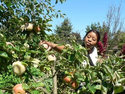 picking fruit